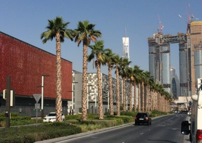 Row of palm trees anchored using Platipus System
