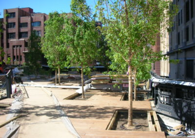 High Line tree installation row of planted trees