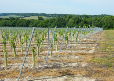 Simpsons Wine Estate - Installing trellising with earth anchors