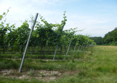 Simpsons Wine Estate Vineyard secured with Platipus earth anchors